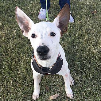 Adopt A Pet :: Max  - Oklahoma City, OK