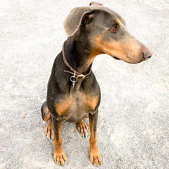 Adopt A Pet :: Rita  - Albuquerque, NM