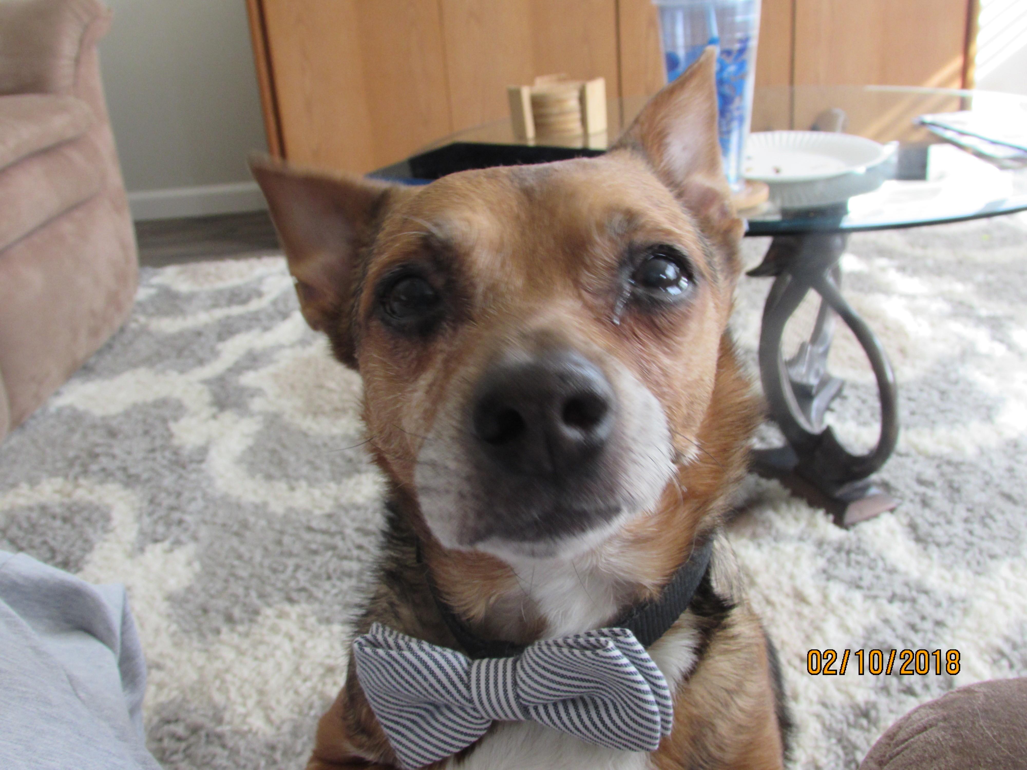 Sacramento, CA - Terrier (Unknown Type, Small). Meet Stubbs! a Dog ...