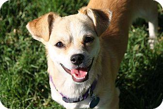 Edmonton Ab Basenji Meet Casper A Pet For Adoption
