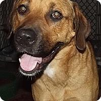 Adopt A Pet :: Yollie - Savannah, MO