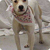 Adopt A Pet :: Sissy - Lebanon, CT