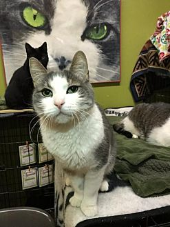 Adopt A Pet :: Addy  - Blasdell, NY