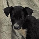 Adopt A Pet :: Erica