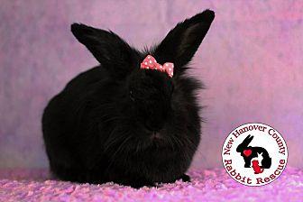 Adopt A Pet :: Gracie  - Wilmington, NC