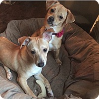 Adopt A Pet :: Tiny Tim and Lucy - Newtown, CT