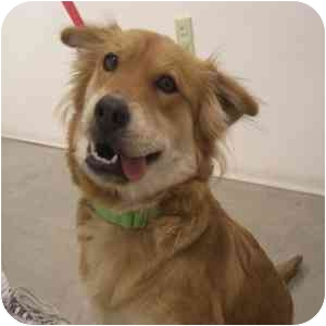Spaniel (Unknown Type) Mix Dog for adoption in Phoenix, Arizona - Heidi