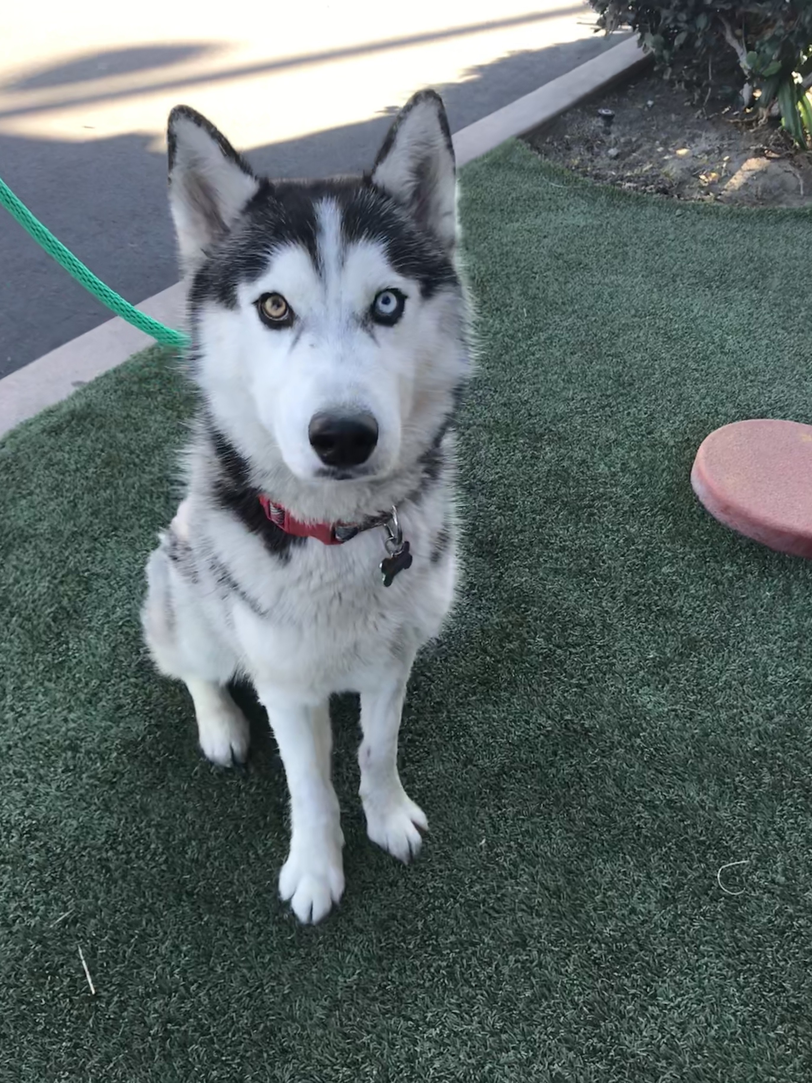 Reasons Why Siberian Husky Puppies For Sale Bay Area Ca Is