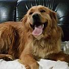 Adopt A Pet :: Mr. Happy