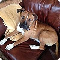 Adopt A Pet :: Buster - La Crosse, WI