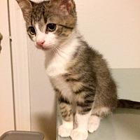 Adopt A Pet :: Ferdinand - Houston, TX
