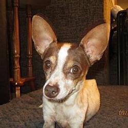 Chihuahua & Small Dog Rescue in C/S & Denver Metro, Colorado