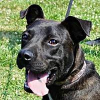 Adopt A Pet :: Maddox - LaHarpe, KS