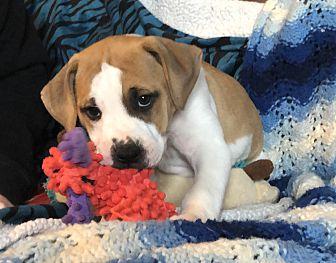 Adopt A Pet :: Vera  - Snow Hill, NC