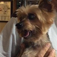 Adopt A Pet :: Tom Tom (FL) - Chattanooga, TN