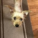 Adopt A Pet :: Kyrie