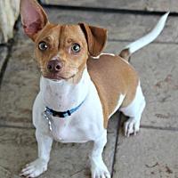 Adopt A Pet :: Toby Bush - Phoenix, AZ