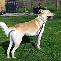 Adopt A Pet :: Tucker - Woodstock, ON