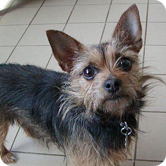 Jackson Mi Chihuahua Meet Bella A Pet For Adoption