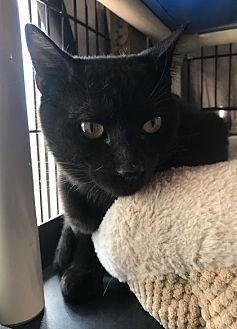 Adopt A Pet :: Binky  - Devon, PA