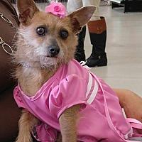 Adopt A Pet :: Daphne - Ponca City, OK