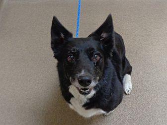 Adopt A Pet :: 19-0418  - Laramie, WY