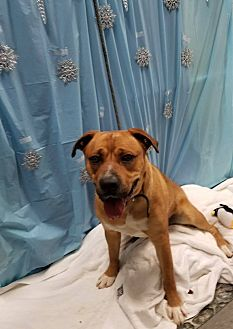 Adopt A Pet :: Baloo  - Henderson, NC