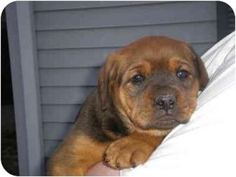 Dog Puppies For Adoption