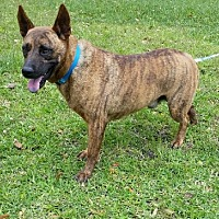 Adopt A Pet :: Bass - N - Huntington, NY