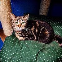 Adopt A Pet :: Tanya - Chino Hills, CA