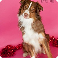 Adopt A Pet :: Monk - La Crosse, WI