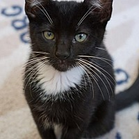 Adopt A Pet :: Zara - Los Angeles, CA