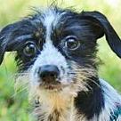 Adopt A Pet :: Meredith B