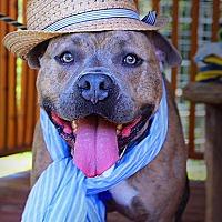 Adopt A Pet :: Rocko - Fort Valley, GA