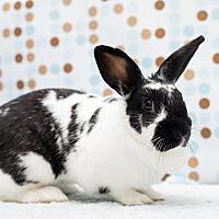 Adopt A Pet :: Xoxie - Los Angeles, CA