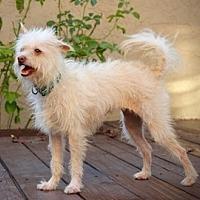 Adopt A Pet :: Daisy - Fremont, CA