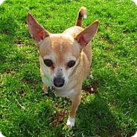 Adopt A Pet :: Patches - Elizabethtown, PA