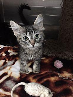 Adopt A Pet :: Zoe  - Moose Jaw, SK