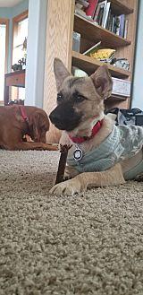 Adopt A Pet :: Nana  - Renton, WA