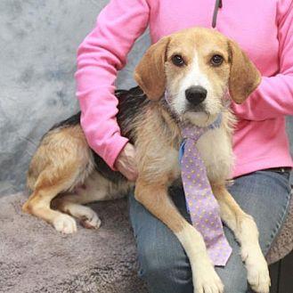 Canine Lifeline Dog Adopt Garfield Heights