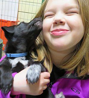 Adopt A Pet :: Lincoln  - Saint Paul, MN