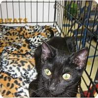 Adopt A Pet :: Sable - Riverside, CA