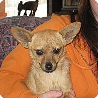 Adopt A Pet :: The Fabulous Miss Ashleigh - Greenville, RI