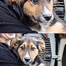 Adopt A Pet :: Connor