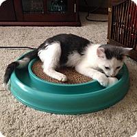 Adopt A Pet :: Ryder - Ogallala, NE