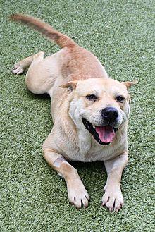 Adopt A Pet :: Lt. Dan  - Germantown, TN