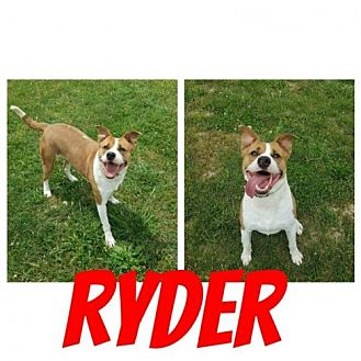 Adopt A Pet :: Ryder  - Mt Vernon, IN