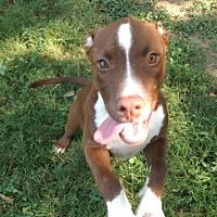Adopt A Pet :: Zak - Fair Oaks Ranch, TX