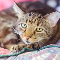 Adopt A Pet :: Reddington - New Freedom, PA