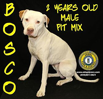 Adopt A Pet :: Bosco  - Nicholasville, KY